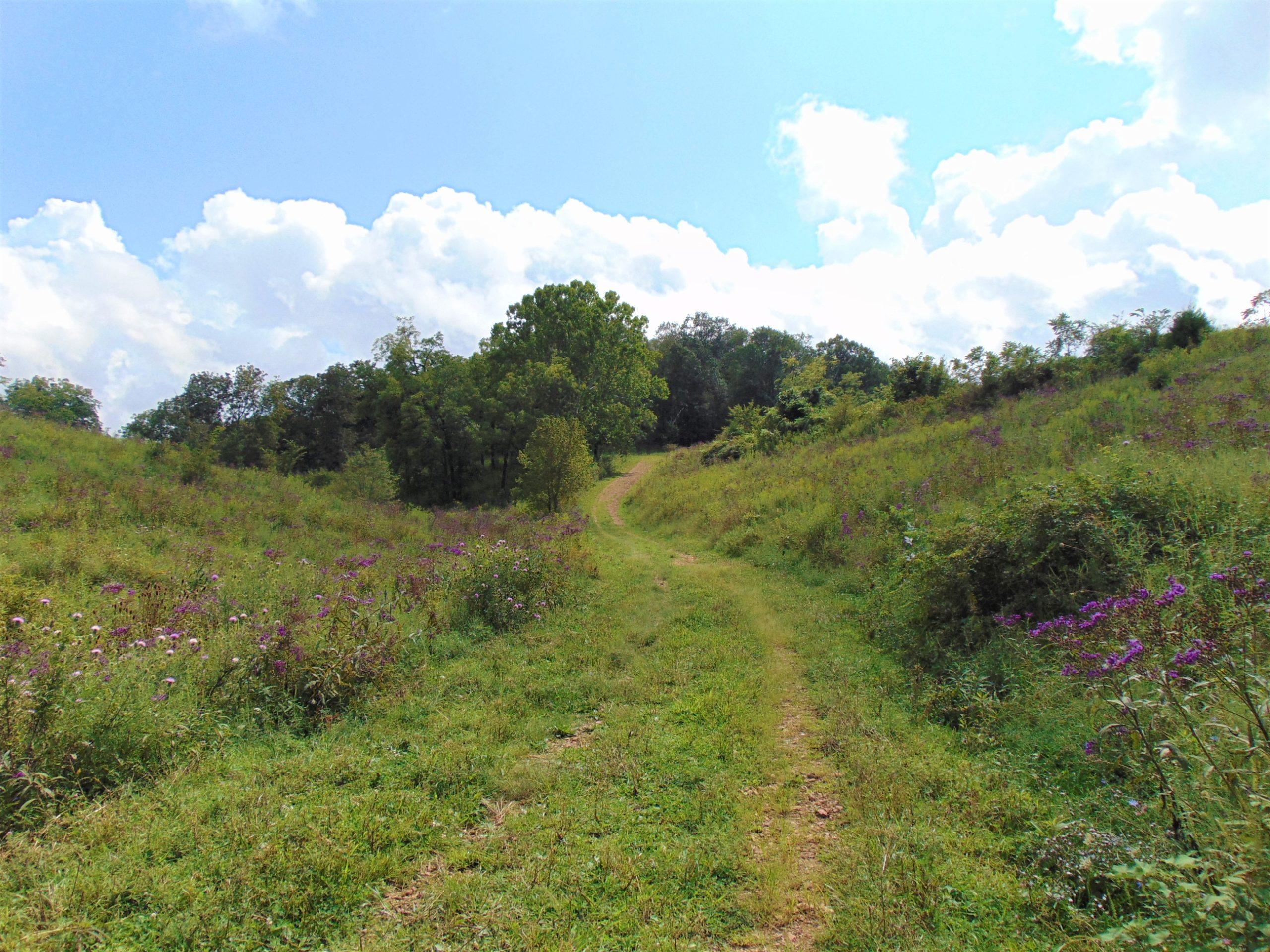117.79 Acres (+/-) of Woods Pleasant Valley Road – Bradfordsville